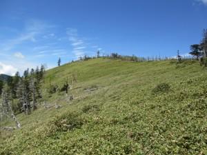 白檜岳へのルートは笹原