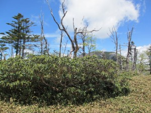 白檜岳山頂