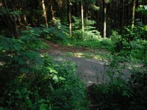 林道を突っ切ると長倉山