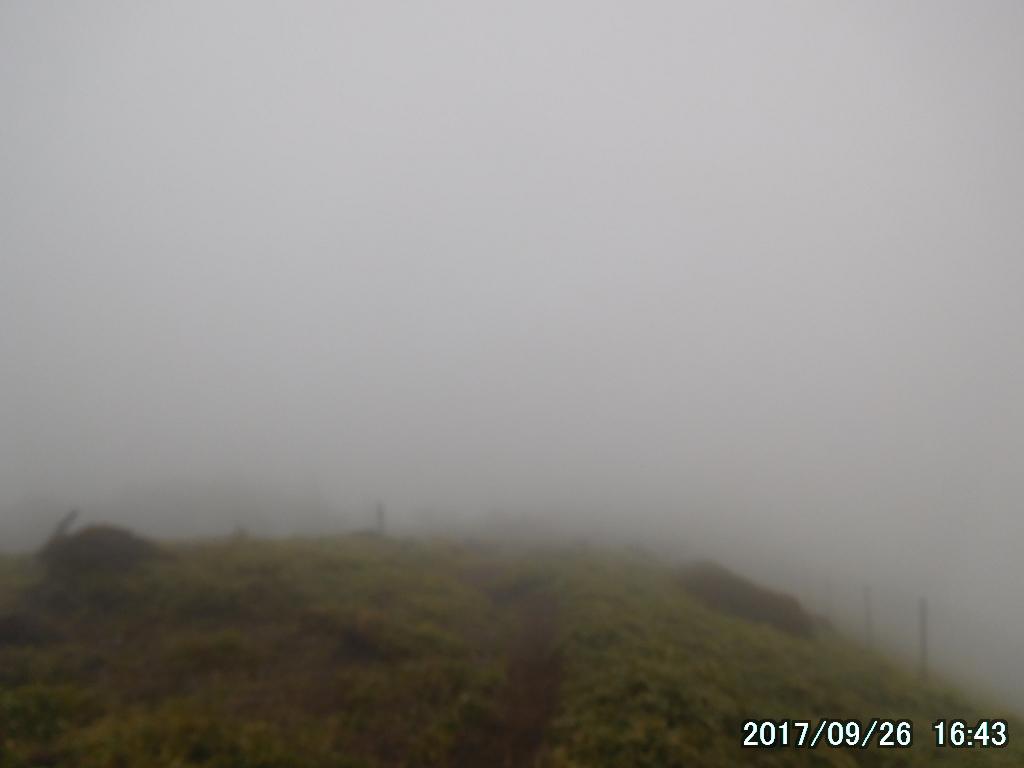 霧の中を歩く女性の姿が見えた