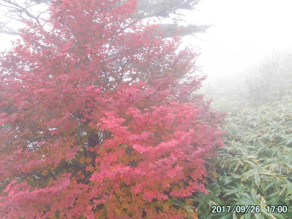 霧の中のツツジの紅葉が見事