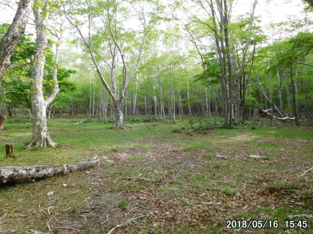 キャンプ場の跡地
