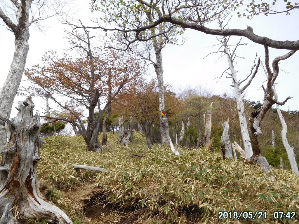 赤薙山への急登