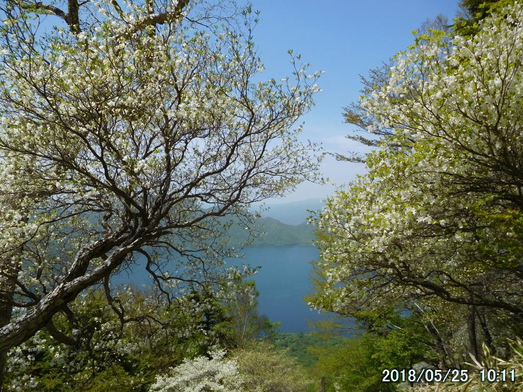 シロヤシオの向こうに中禅寺湖