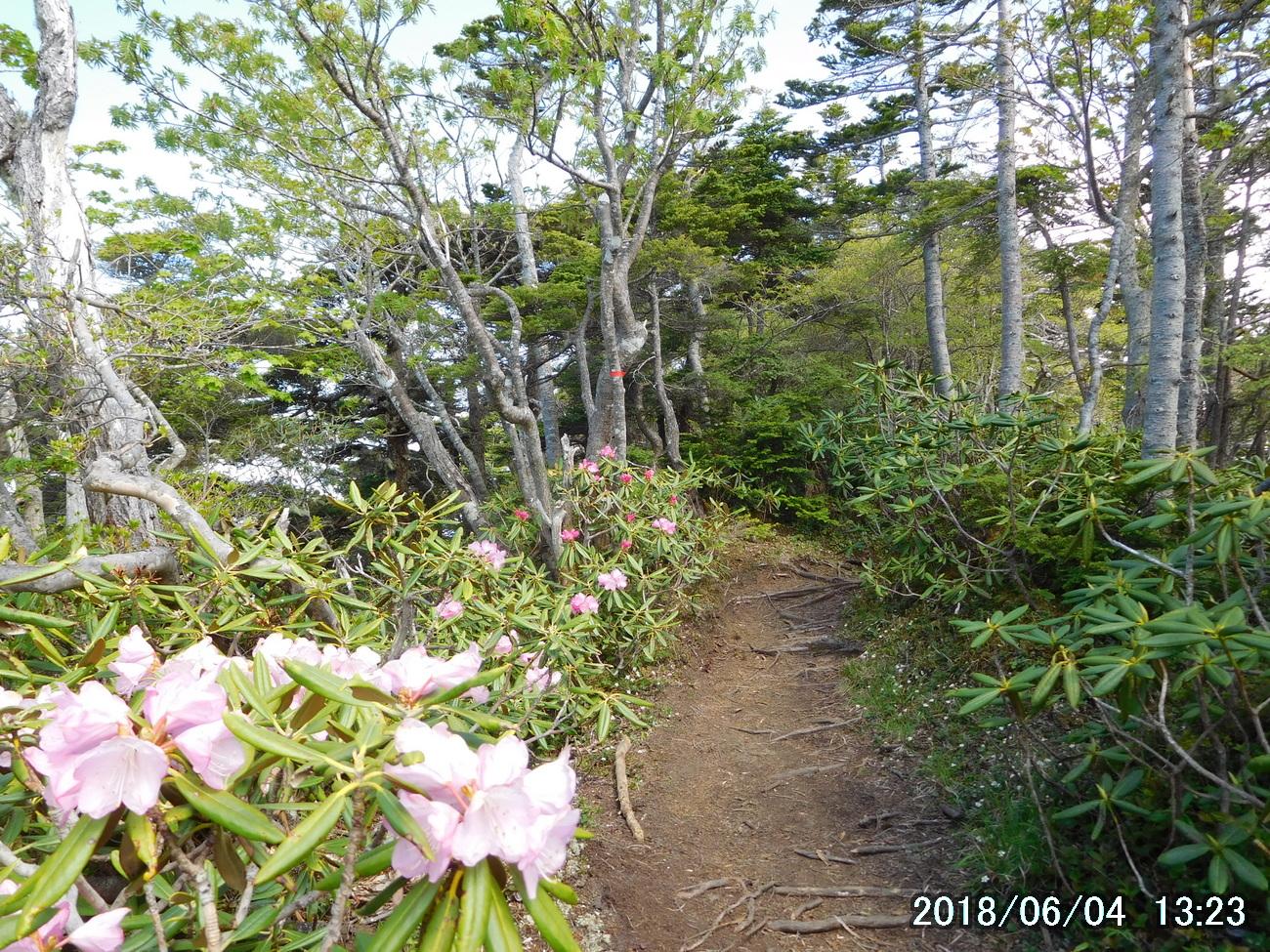 シャクナゲ咲く日本庭園