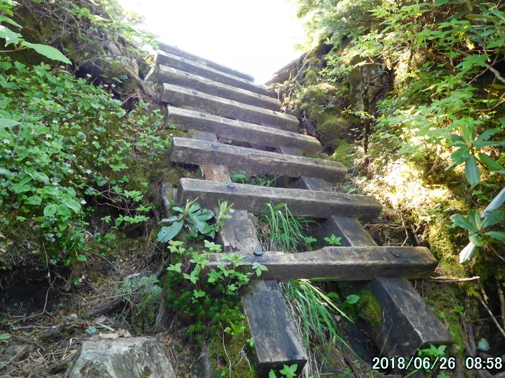 大津岐峠へのハシゴ