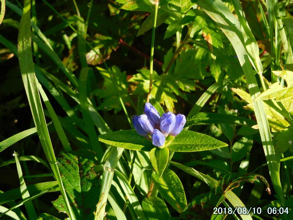 キスゲ平の秋の花たち