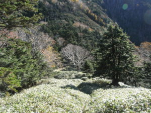 小太郎山へ向かう下り傾斜