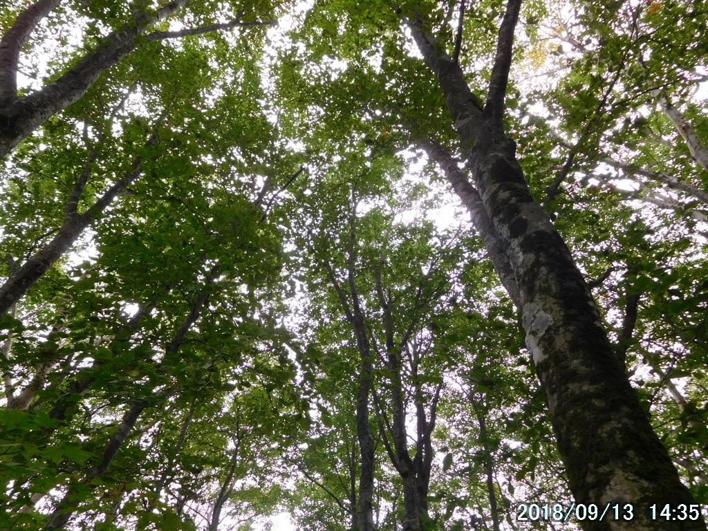 気持ちのいい広葉樹林