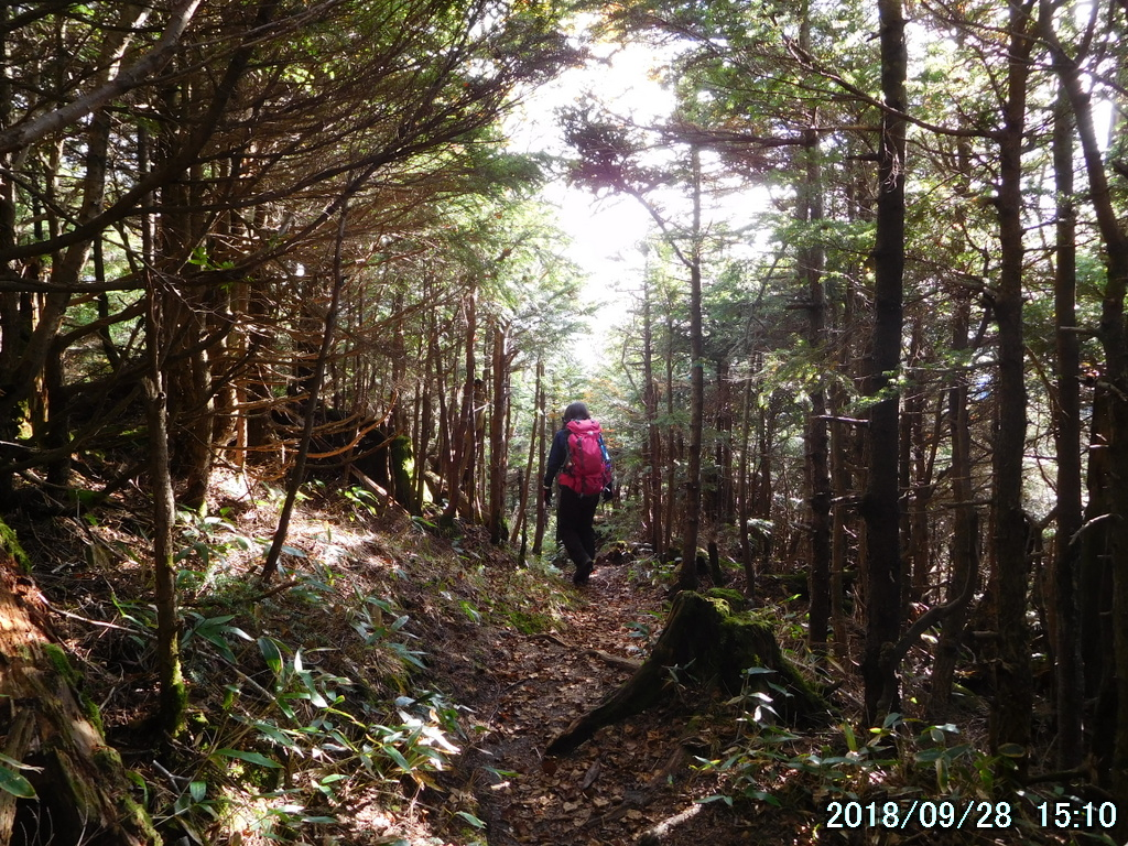 コメツガの樹林帯