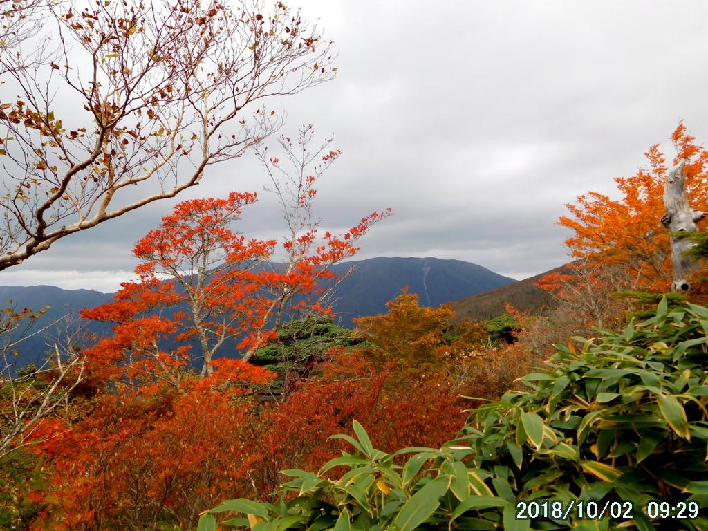 山を背景に紅葉