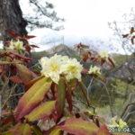古賀志山で見る花たち(2019/04/09)。地図付き。