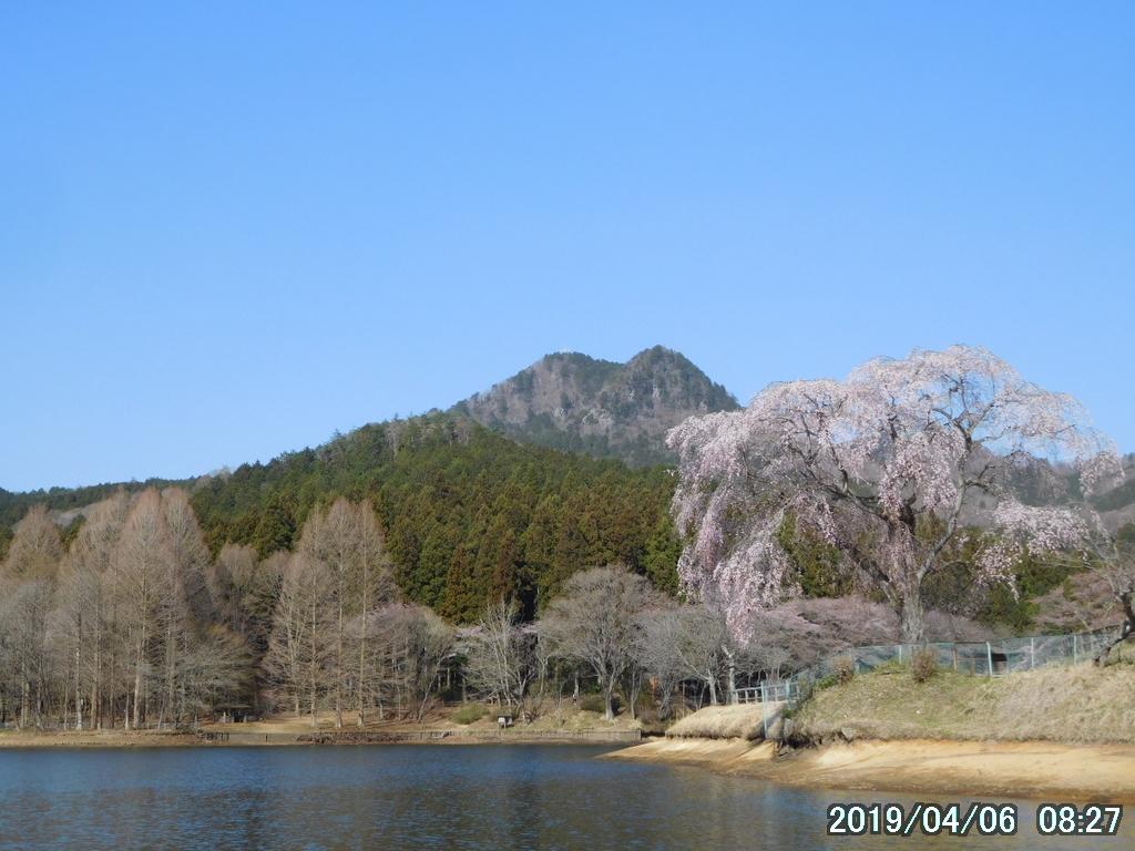 古賀志山で見る花たち(2019/04/06)