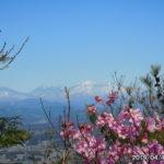 古賀志山で見る花たち(2019/04/13)