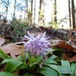 古賀志山で見る花たち(2020/03/15)