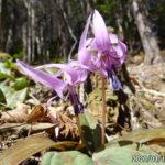 古賀志山で見る花たち(2020/03/19)
