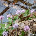 古賀志山で見る花たち(2020/03/23)