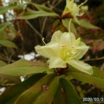 古賀志山で見る花たち(2020/03/31)