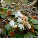 古賀志山で見る花たち(2020/04/22)。そして登山自粛について考える。