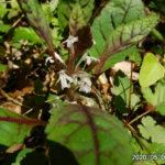 古賀志山で見る花たち(2020/05/01)