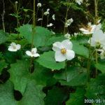 古賀志山で見る花たち(2020/05/13)